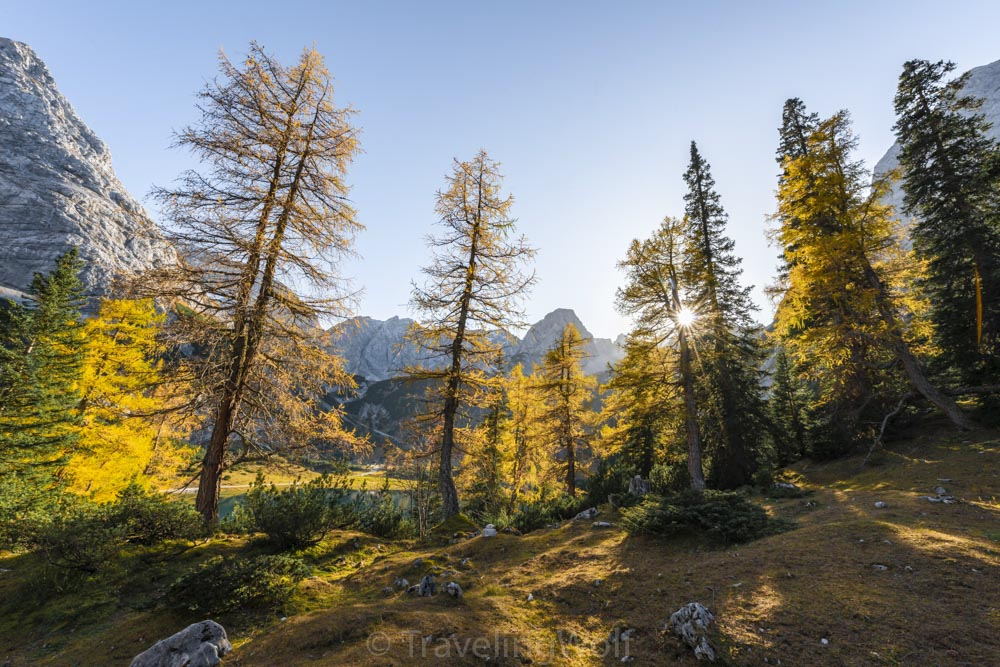 larches autumn seebensee ehrwald autumn tyrol