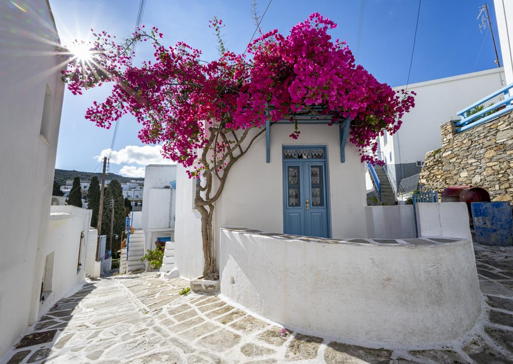 bouganvillea house lefkes paros cyclades greece