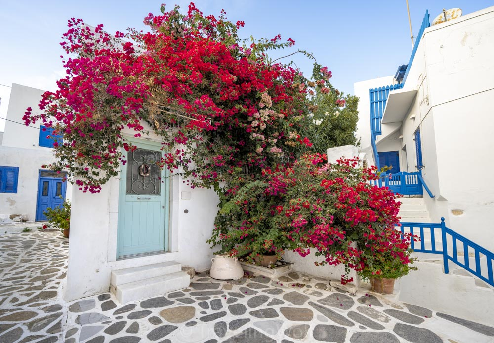 bouganvillea house paros parikia village cyclades greece