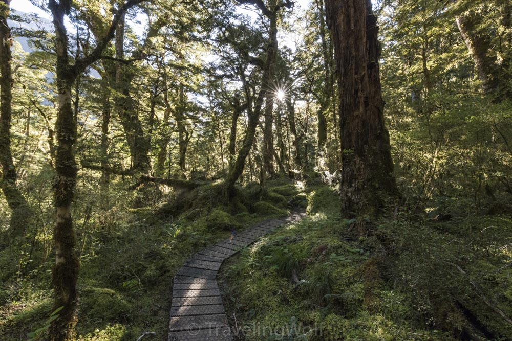 kepler-track-new-zealand-great-walk-forest