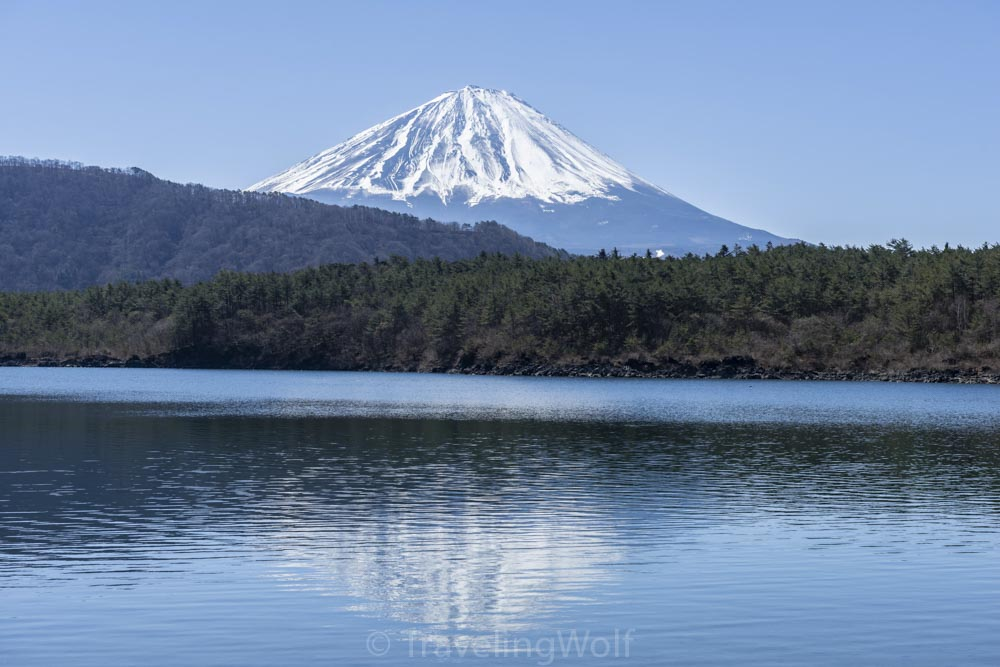lake saiko mount fuji japan
